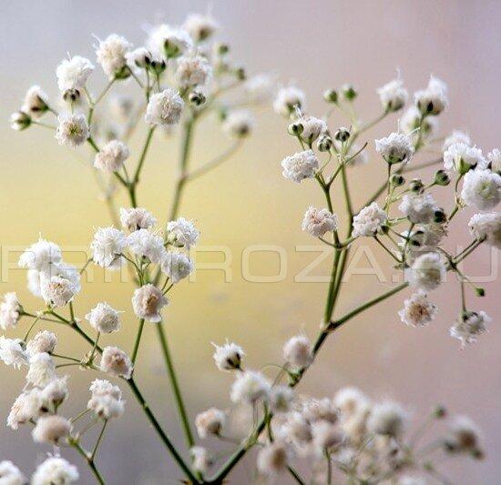 Мелкие цветы в букетах